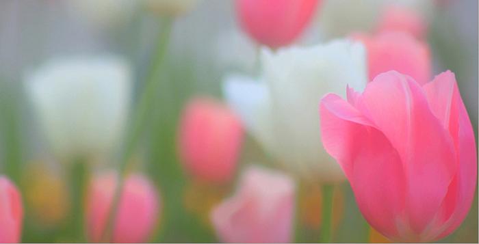 The Springtime Manifesto