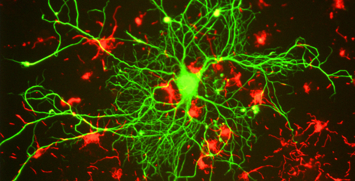 Committee Urges Grad. Neuroscience Support