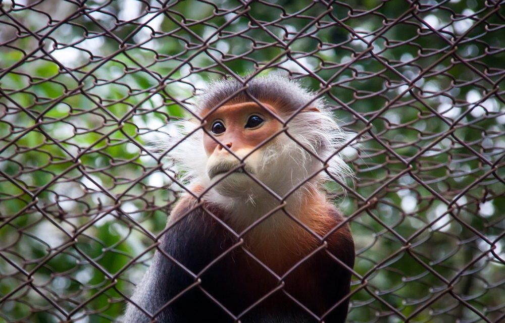 Two Primates Die at Yerkes Due to Alleged Negligence