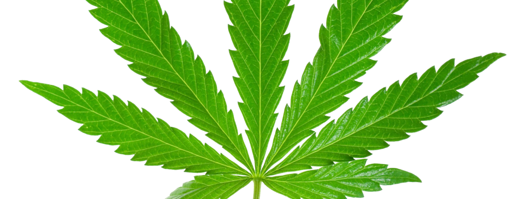 Weed Is No Menace to Society | The Emory Wheel